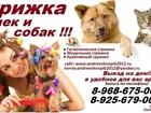 Изображение в Собаки и щенки Стрижка собак Предлагаем к вашему Вниманию! свои услуги в Ногинске 100