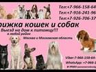 Скачать бесплатно изображение Разное Стрижка кошек и собак Выезд на дом в любой район Москвы и Московской области 37090905 в Ногинске