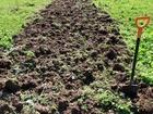 Скачать фотографию  копка огорода 38967614 в Ногинске