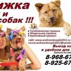 стрижка животных выезд на дом,Стрижка кошек и собак