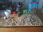 Фото в Домашние животные Грызуны Красивые ручные мышата, родились зимой. Плюс в Новочебоксарске 900