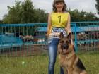 Изображение в   Предлагаю для вязки кобеля немецкой овчарки. в Новокузнецке 0