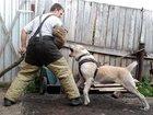 Скачать фото  Дрессировка собак в Новокузнецке 39986158 в Новокузнецке