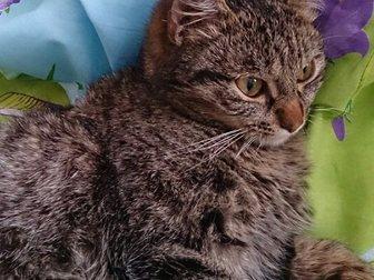 Свежее изображение Отдам даром Отдам молодого котика 32546926 в Новокузнецке