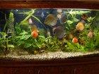 Фото в Рыбки (Аквариумистика) Изготовление аквариумов Изготовление бескаркасных аквариумов любой в Новомосковске 0