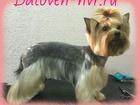Свежее фотографию Стрижка собак Профессиональная стрижка собак и кошек в Новороссийске, Баловень, 39865250 в Новороссийске