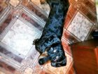 Свежее изображение  ОТдам 32436365 в Новосибирске