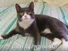 Скачать бесплатно фото  Кошка Соня 32448265 в Новосибирске