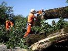 Фото в   Валка, обрезка деревьев.   Удаление пней. в Новосибирске 700