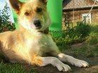 Фото в Собаки и щенки Продажа собак, щенков Дружелюбная, задорная, смешная и улыбчивая в Новосибирске 0