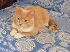 Увидеть фотографию Вязка Симпатичный кот ищет кошечку 34572230 в Новосибирске