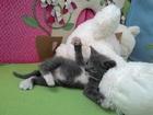 Смотреть изображение Найденные Котенок ищет надежных хозяев! 35884992 в Новосибирске