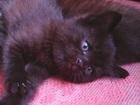 Изображение в Кошки и котята Продажа кошек и котят Отдам в добрые руки очаровательных котят в Новосибирске 0