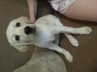 Изображение в Собаки и щенки Продажа собак, щенков ! ! ! ! ! ! ! ! ! ! ! ! ! ! ! ! ! ! ! ! ! в Новосибирске 15000