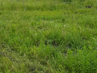 Фотография в   Срочно продам участок 5. 02 сотки в коттеджном в Новосибирске 460000