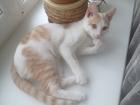 Скачать бесплатно фотографию  Красивый молодой котик ждет свою кошечу 38769170 в Новосибирске