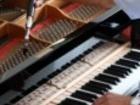 Уникальное изображение  Настройка, ремонт и выбор пианино(фортепиано), Бесплатные консультации 38905367 в Новосибирске