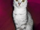 Фотография в Кошки и котята Продажа кошек и котят Отдам кошечку в добрые руки.   Зовут Альбина, в Новосибирске 0