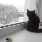 Пушистый черный котенок