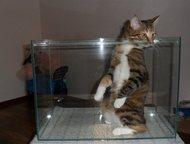 продам аквариум Аквариум 45 литров , без сколов.