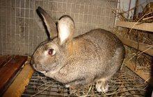 Кролики с доставкой