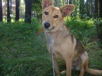 Скачать бесплатно фотографию Отдам даром Собаку в хорошие руки 32697217 в Новосибирске