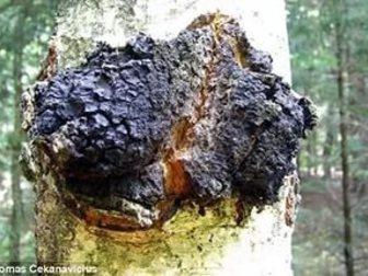 Просмотреть foto  Дары природы Горной Шории 34949055 в Новосибирске