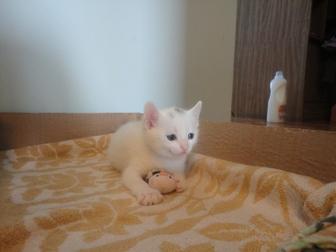 Свежее фото  Отдам в добрые руки милейшего котёнка!) 40024333 в Новосибирске