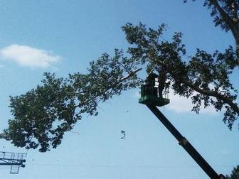 Скачать фотографию Другие строительные услуги Спил деревьев в Новосибирске 70404314 в Новосибирске