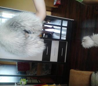 Изображение в Домашние животные Разное срочно продам зимнюю шапку из песца для девочки в Новосибирске 500