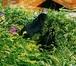 Foto в   Крестьянско-фермерское хозяйство реализует в Новосибирске 2500