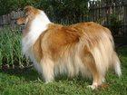 Фотография в Собаки и щенки Выставки собак Ждут любящего владельца мальчик и девочка в Орске 0