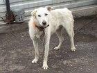 Изображение в Собаки и щенки Продажа собак, щенков КВИНТО- мальчик около года, чуть выше среднего в Омске 0