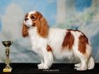 Скачать бесплатно foto  вязка собак 37855536 в Омске