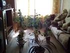 Изображение в Недвижимость Продажа квартир 3 комнатная шикарная квартира в сердце Первомайского в Омске 2600000