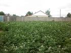 Смотреть foto  Вокруг деревни березовые колки с большим количеством грибов, ягод 68060857 в Омске