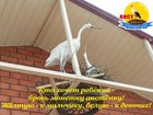 Новое foto  пансионат для летнего отдыха в Крыму г, Саки 81418344 в Омске