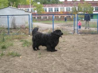 Смотреть foto Продажа собак, щенков В добрые руки ! 36814586 в Омске