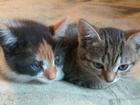 Скачать бесплатно фотографию  Котята в дар, игривые, здоровые, 39675539 в Орле