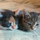Котята в дар, игривые, здоровые