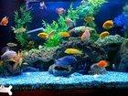 Изображение в Рыбки (Аквариумистика) Уход за аквариумом Все услуги по уходу за аквариумом. в Оренбурге 500