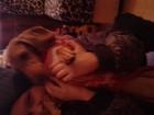 Новое фотографию Найденные Пропала рыжая такса,с чёрным ошейником,девочка, 38536778 в Оренбурге