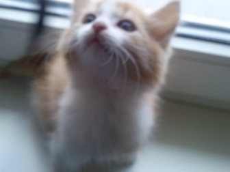 Новое фотографию Отдам даром Отдам котенка в добрые руки 33379884 в Оренбурге