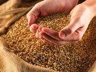 Фото в Домашние животные Корм для животных продажа зерна, комбикорма, отрубей, сухого в Озеры 1
