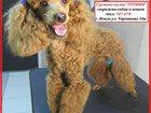 Фотография в Собаки и щенки Стрижка собак Всегда приятно смотреть на ухоженных животных! в Пензе 0