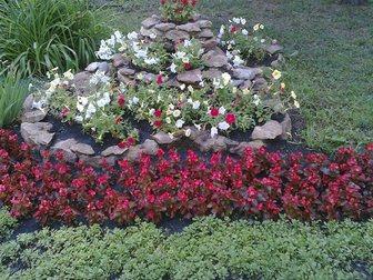 Скачать фото Ландшафтный дизайн Цветы постоянноцветущие, Клумбы и цветники, 32484406 в Пензе