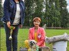 Увидеть фотографию Услуги для животных Хендлинг, обучение хендлингу, подготовка собак к выставке 34322811 в Перми