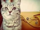 Скачать фото  Ищем кота ! 36958733 в Перми