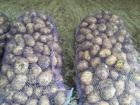 Изображение в   Реализуем картофель урожай 2016 года (от в Перми 14