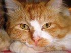 Скачать бесплатно foto Потерянные Потерялся кот 32374661 в Петрозаводске